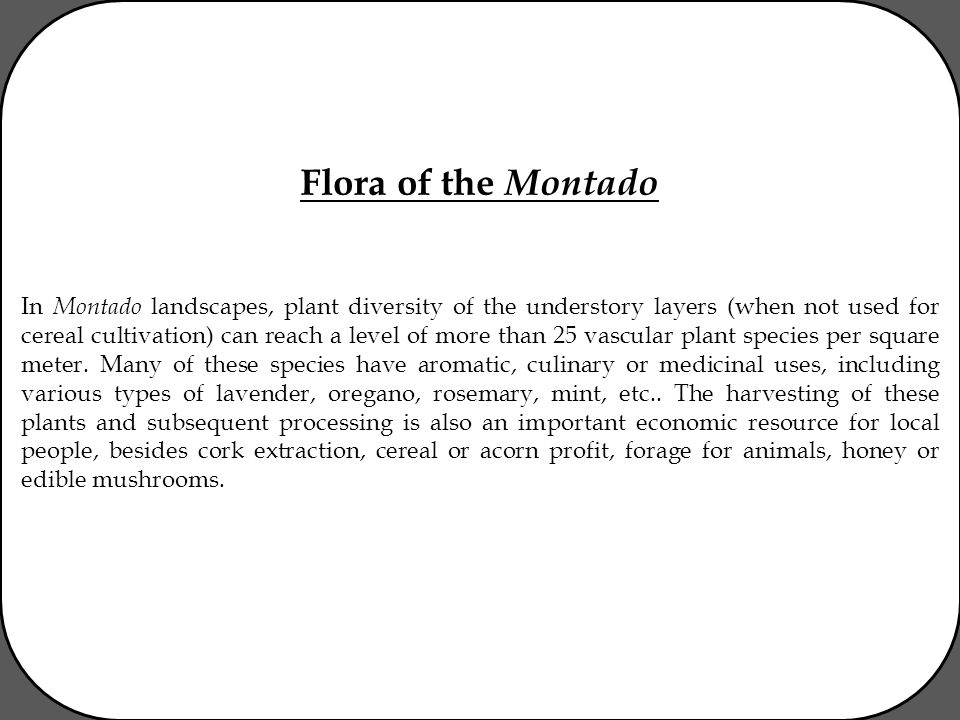 Flora of the Montado In Montado landscapes, plant diversity of the understory layers (when not used for cereal cultivation) can reach a level of more than 25 vascular plant species per square meter.