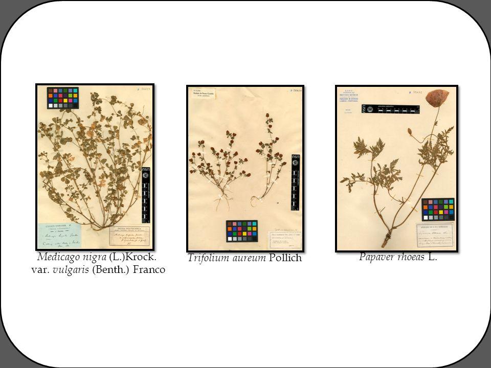 Medicago nigra (L.)Krock. var. vulgaris (Benth.) Franco Trifolium aureum Pollich Papaver rhoeas L.