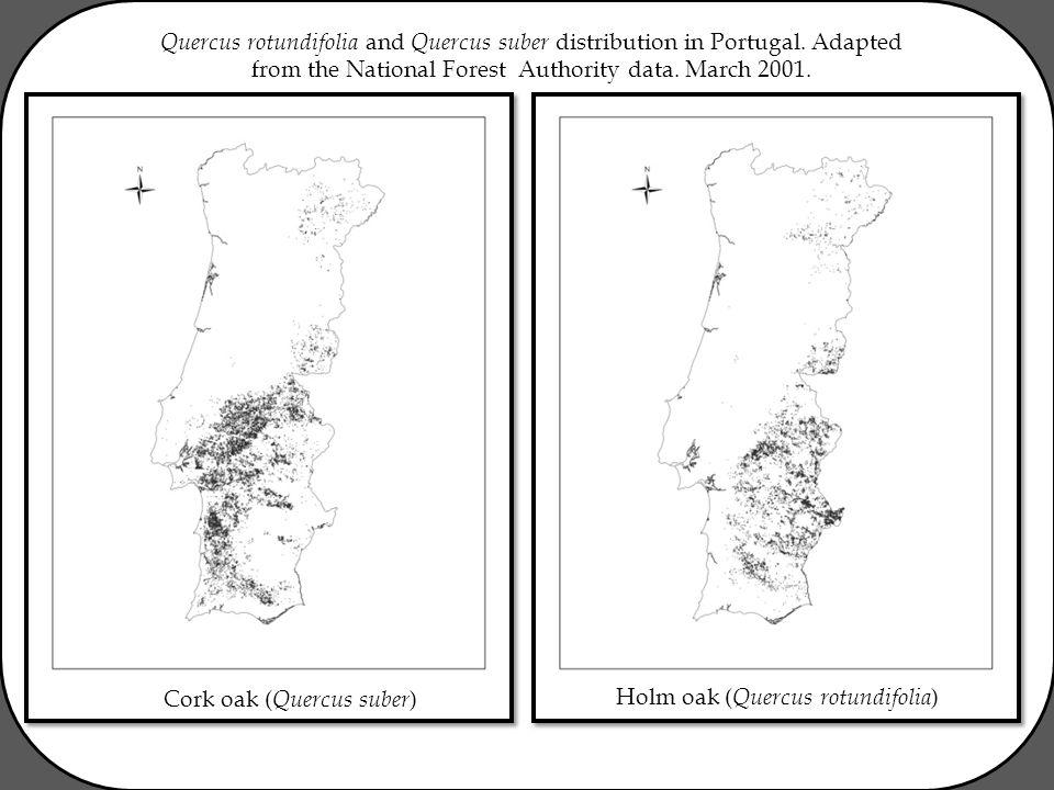 Quercus rotundifolia and Quercus suber distribution in Portugal.