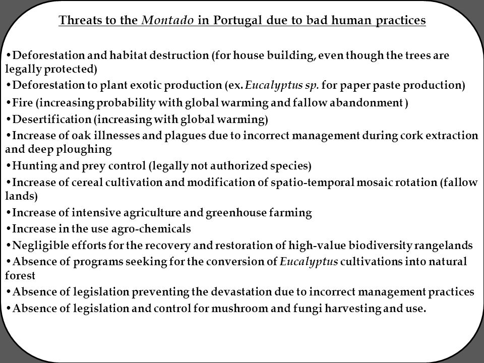 Threats to the Montado in Portugal due to bad human practices Deforestation and habitat destruction (for house building, even though the trees are legally protected) Deforestation to plant exotic production (ex.