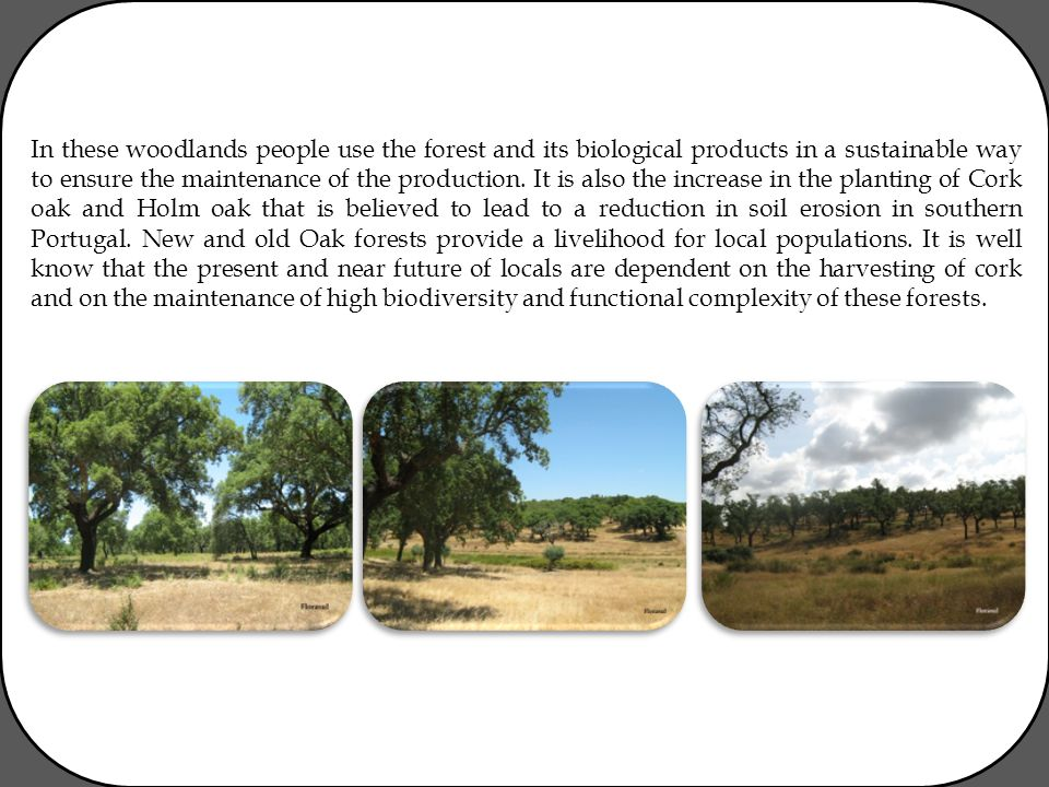 In these woodlands people use the forest and its biological products in a sustainable way to ensure the maintenance of the production. It is also the