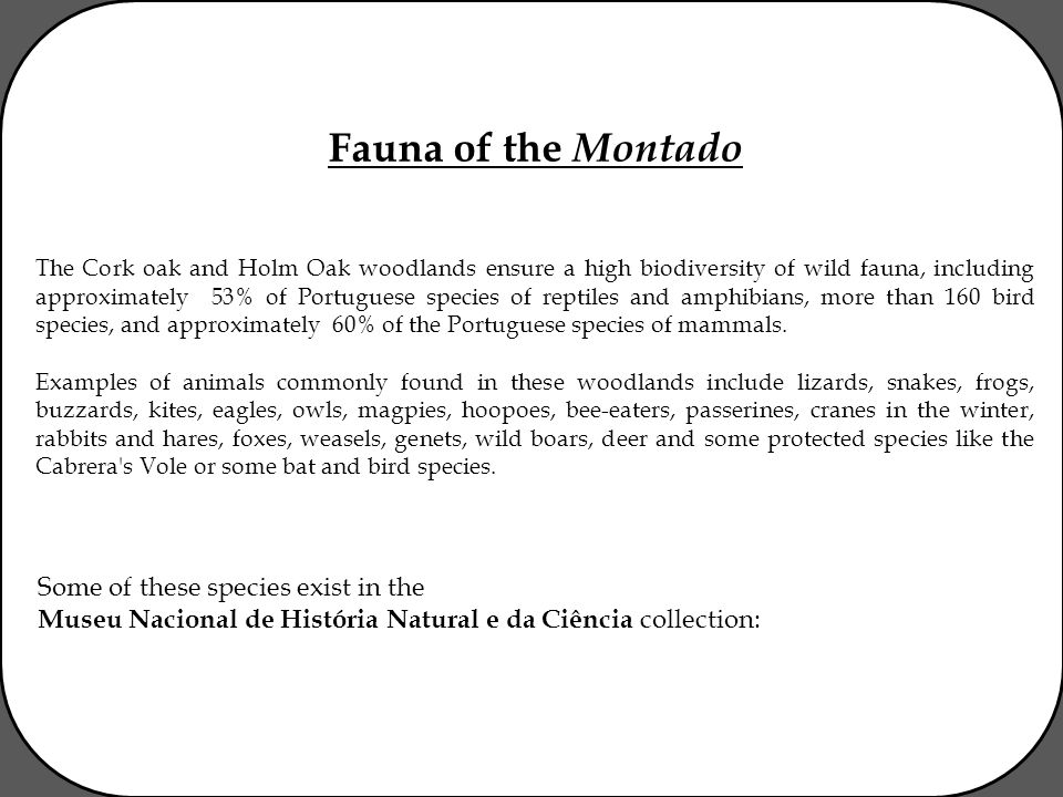 Fauna of the Montado The Cork oak and Holm Oak woodlands ensure a high biodiversity of wild fauna, including approximately 53% of Portuguese species of reptiles and amphibians, more than 160 bird species, and approximately 60% of the Portuguese species of mammals.