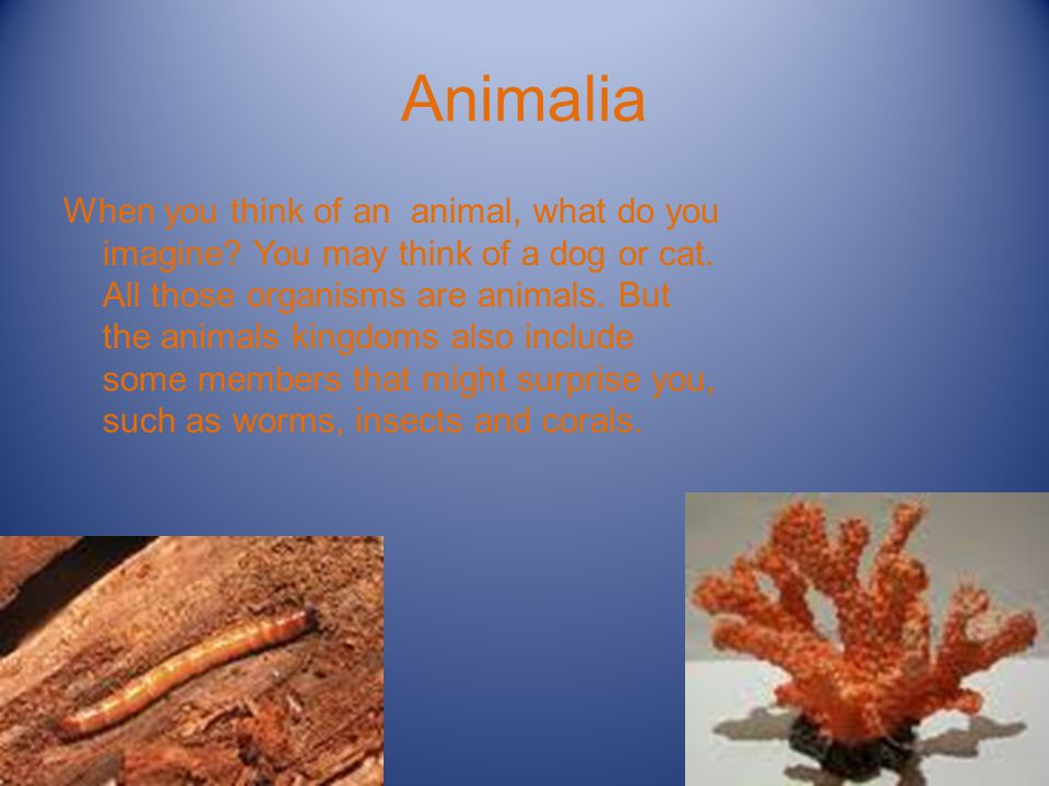 Animalia When you think of an animal, what do you imagine.