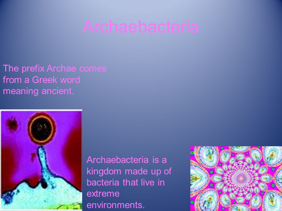 Archaebacteria The prefix Archae comes from a Greek word meaning ancient.