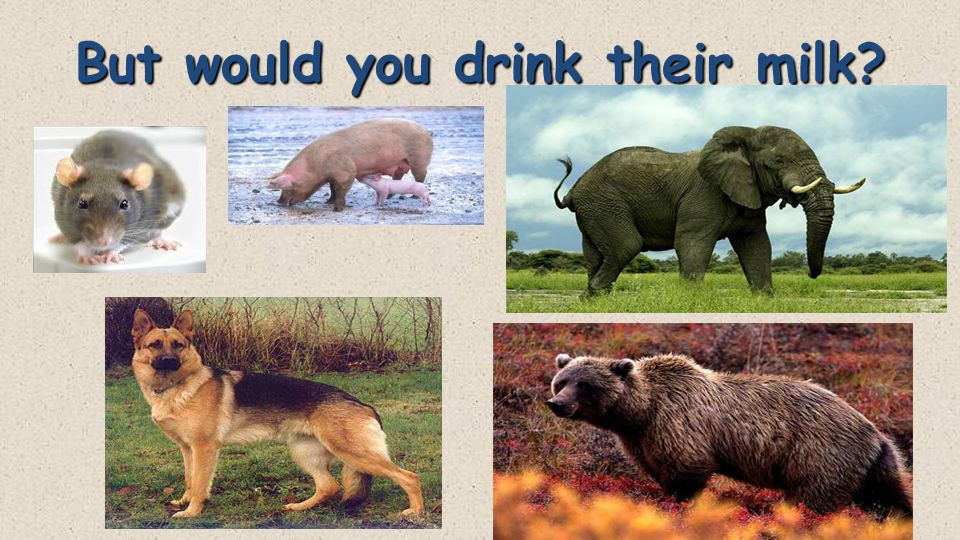 But would you drink their milk