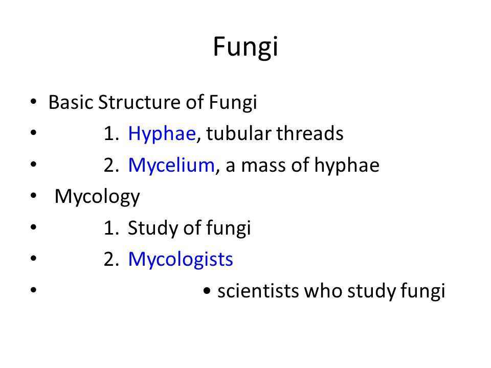 Fungi Basic Structure of Fungi 1.Hyphae, tubular threads 2.Mycelium, a mass of hyphae Mycology 1.Study of fungi 2.Mycologists scientists who study fungi