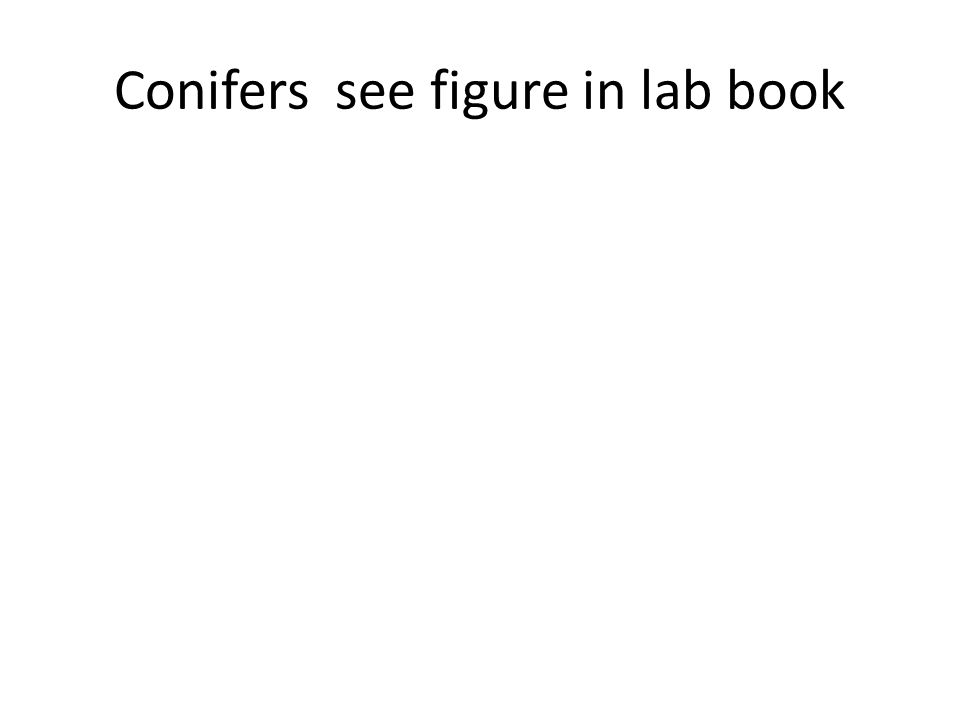 Conifers see figure in lab book