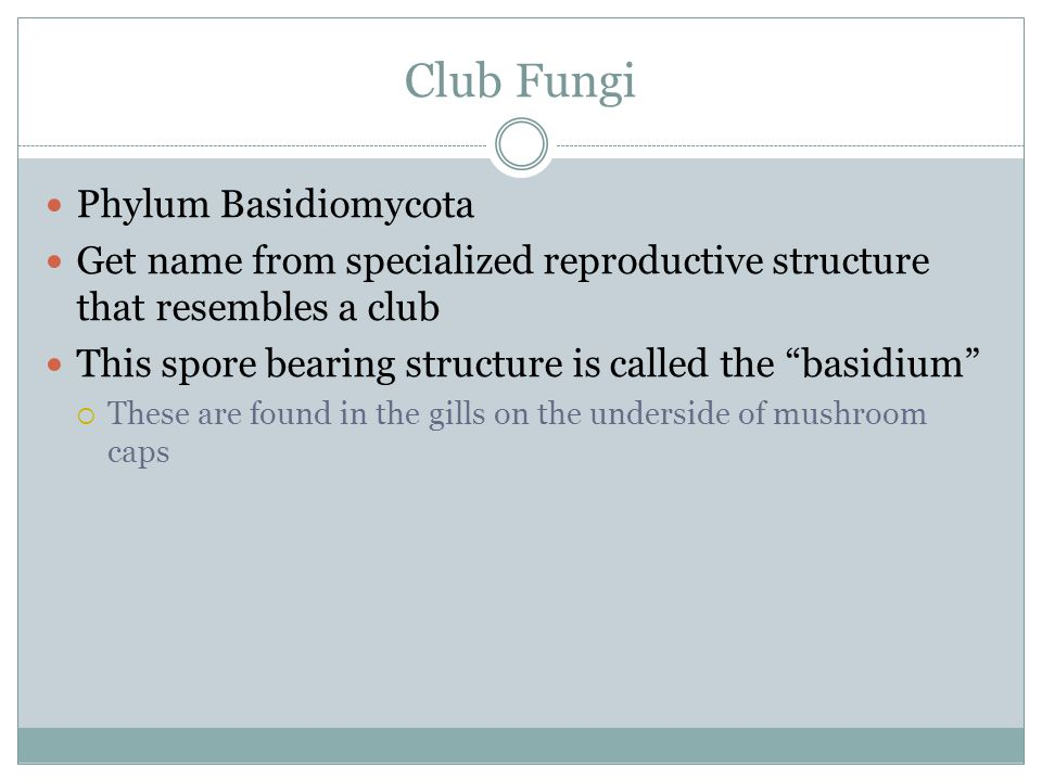 "Club Fungi Phylum Basidiomycota Get name from specialized reproductive structure that resembles a club This spore bearing structure is called the ""bas"