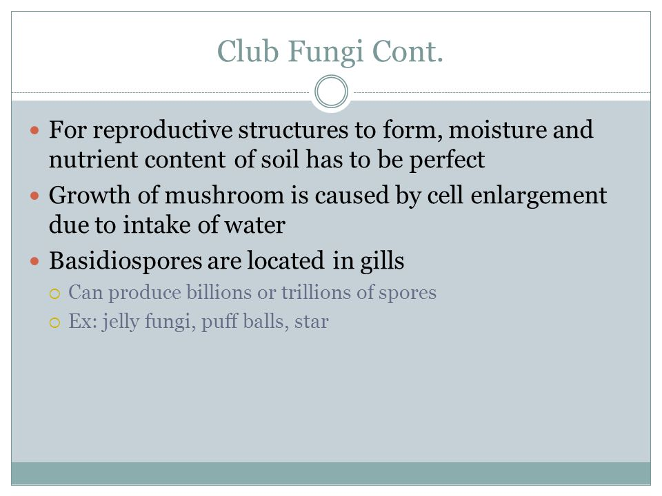 Club Fungi Cont. For reproductive structures to form, moisture and nutrient content of soil has to be perfect Growth of mushroom is caused by cell enl