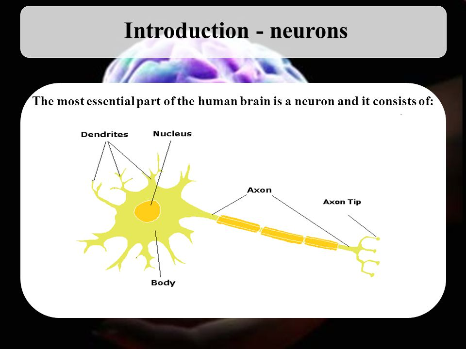 3 Introduction - neurons The most essential part of the human brain is a neuron and it consists of: