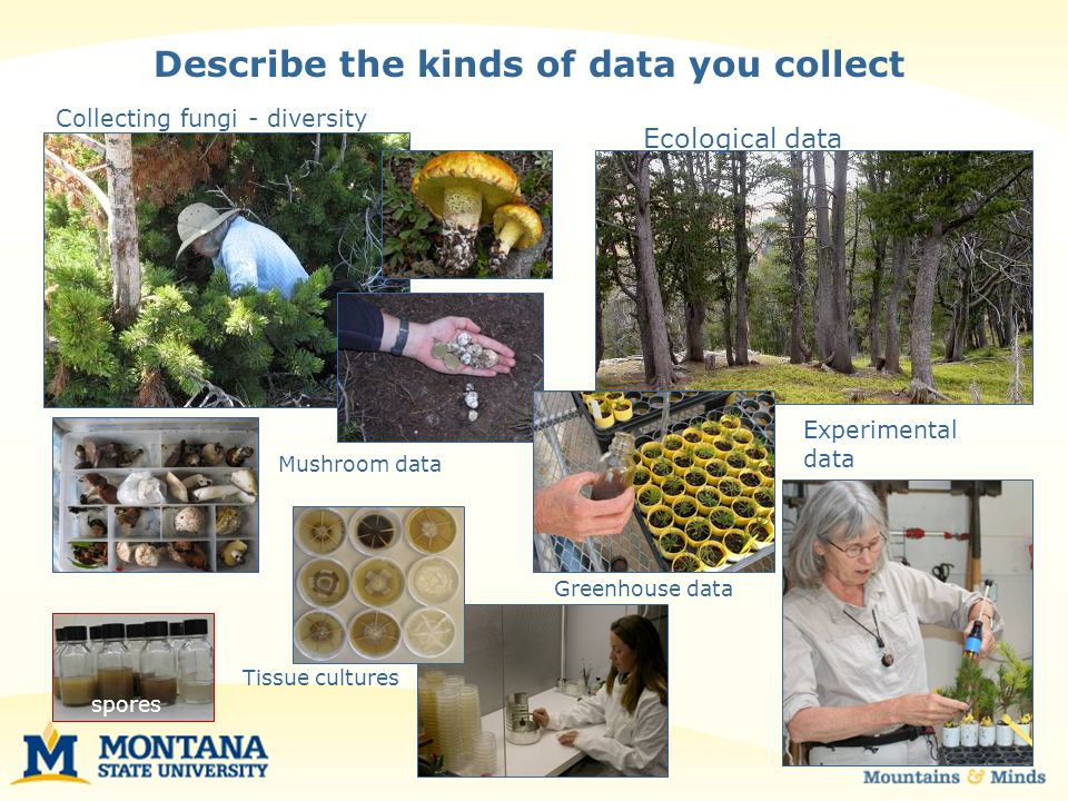 Describe the kinds of analysis you perform Dried herbarium specimens DNA analysis Classical taxonomy Physiological parameters survival, growth ANOVA Regression analysis Principal component analysis Phylogenetic analysis Colonization rates treatments Comparative identification Evolutionary history