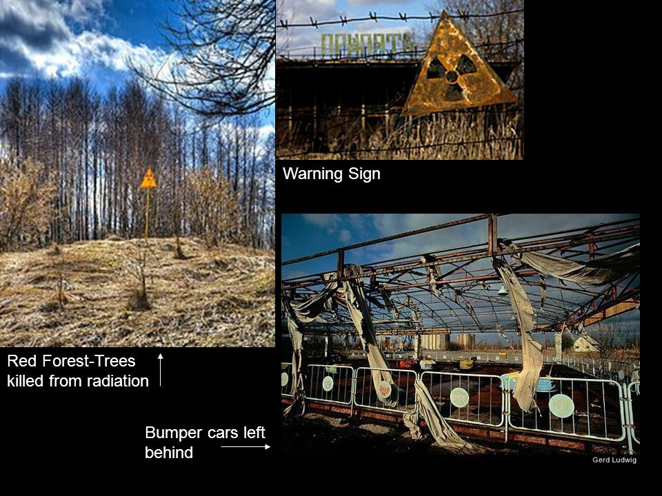 Red Forest-Trees killed from radiation Warning Sign Bumper cars left behind