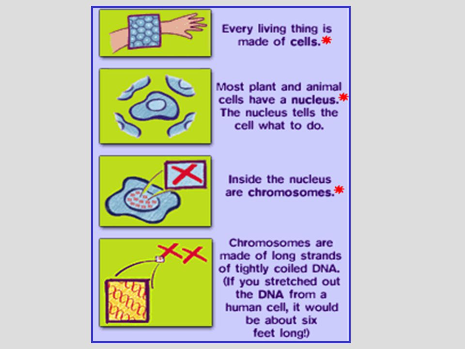 DNA is made up of steps and rails of a ladder.