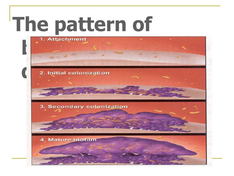 The pattern of biofilm development