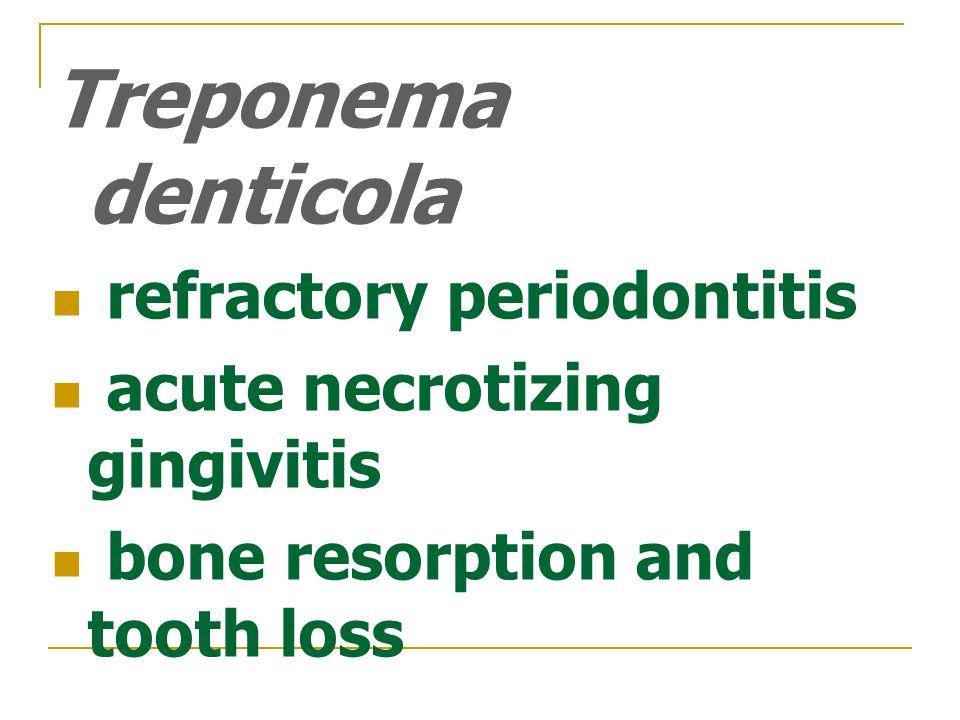 Treponema denticola refractory periodontitis acute necrotizing gingivitis bone resorption and tooth loss