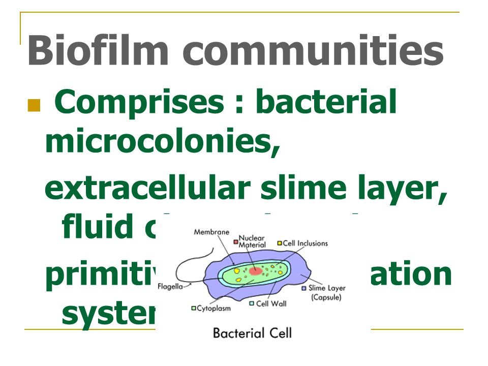 Biofilm communities Comprises : bacterial microcolonies, extracellular slime layer, fluid channels and primitive communication system