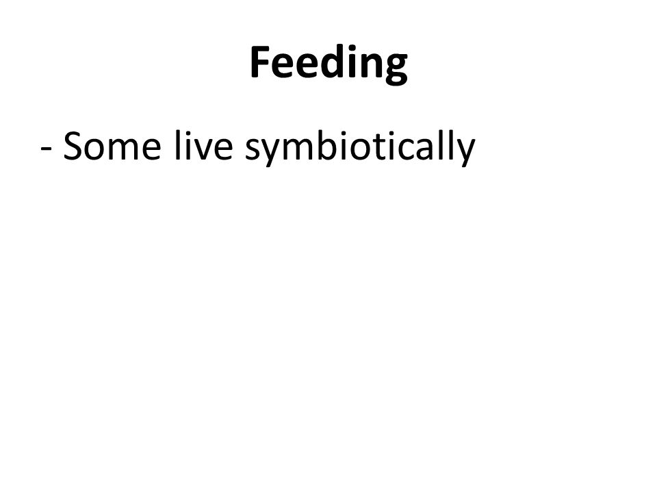 Feeding - Some live symbiotically