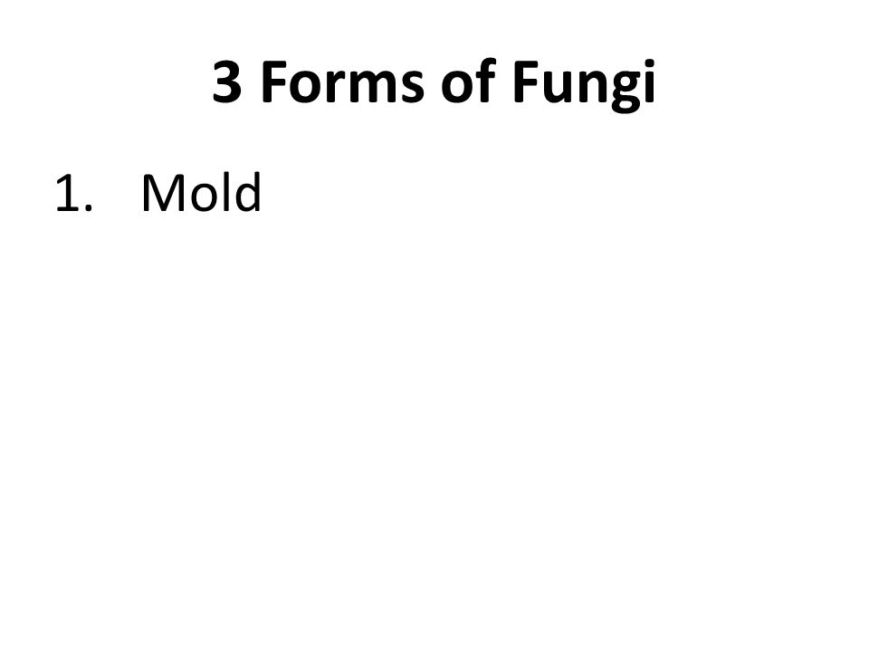 3 Forms of Fungi 1.Mold