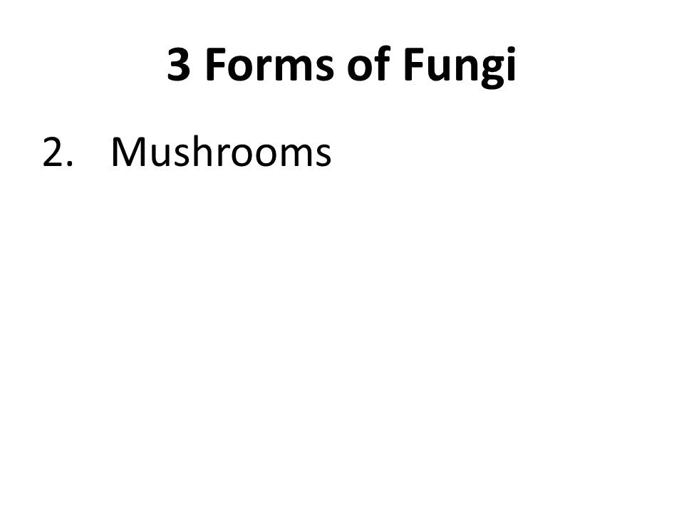 3 Forms of Fungi 2.Mushrooms