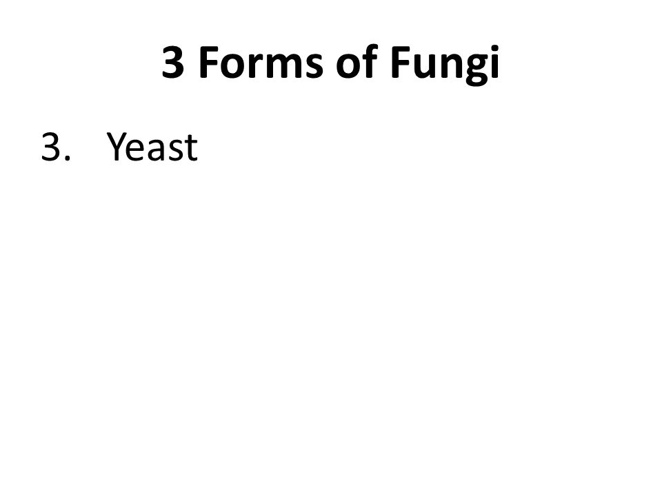 3 Forms of Fungi 3.Yeast