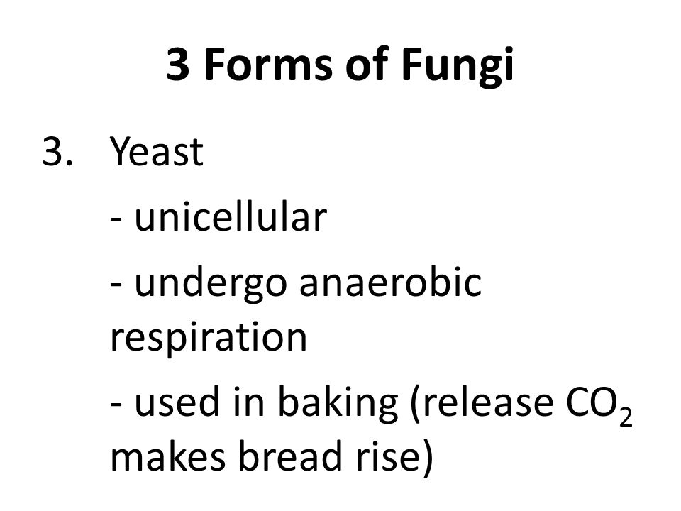 3 Forms of Fungi 3.Yeast - unicellular - undergo anaerobic respiration - used in baking (release CO 2 makes bread rise)