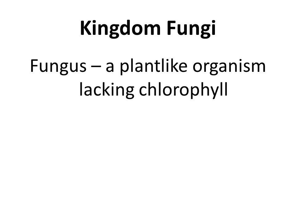Kingdom Fungi Fungus – a plantlike organism lacking chlorophyll