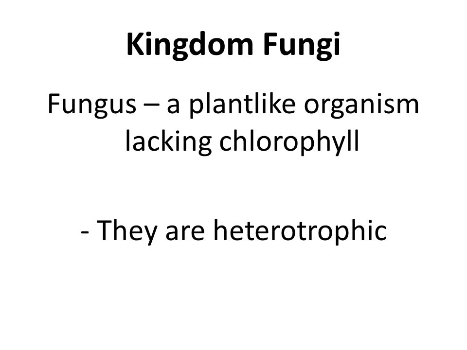 Kingdom Fungi Fungus – a plantlike organism lacking chlorophyll - They are heterotrophic