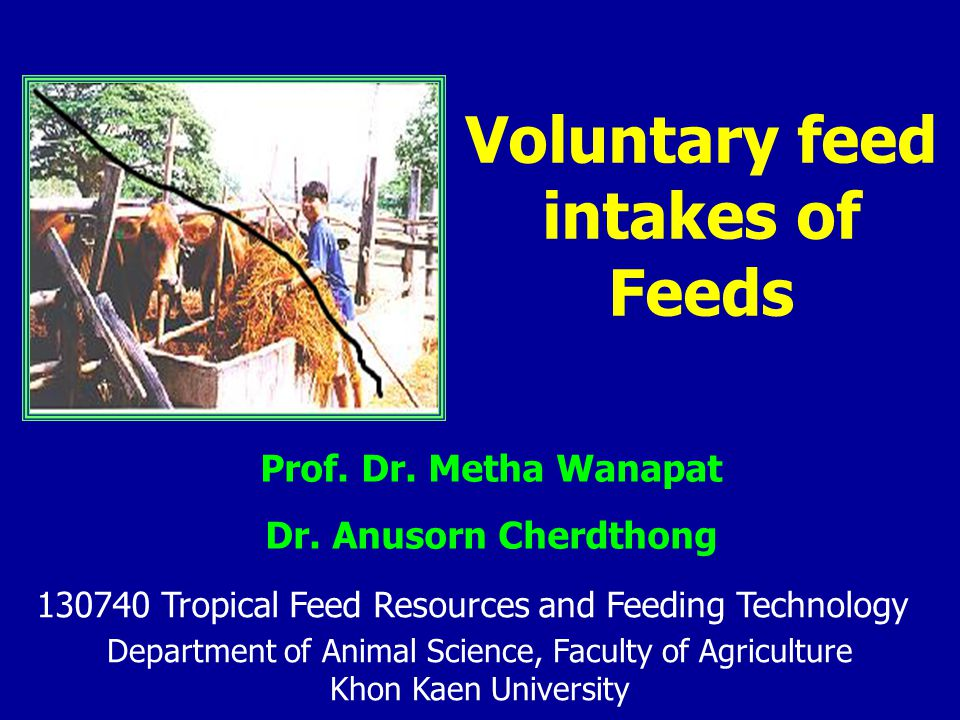 Factors affecting on voluntary feed intake Rumen distention/gut-fill –the ability of rumen to expand to fill in feed particles until compacts and depends on feed bulkiness Rumen conditions –pH < 6.0 intake < 5.5severe intake - VFAs C 2 > C 3 > C 4 intake