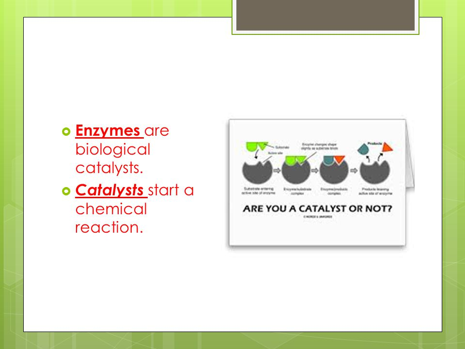 Enzymes join to their substrate. The substrate attaches to the active site on the enzyme.