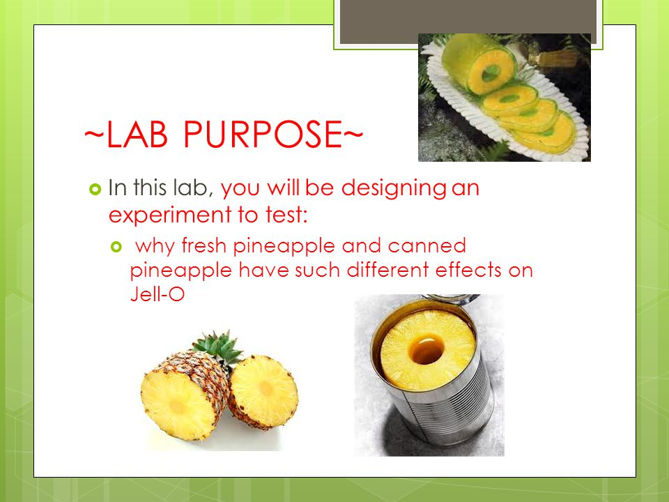 ~LAB PURPOSE~  In this lab, you will be designing an experiment to test:  why fresh pineapple and canned pineapple have such different effects on Jell-O