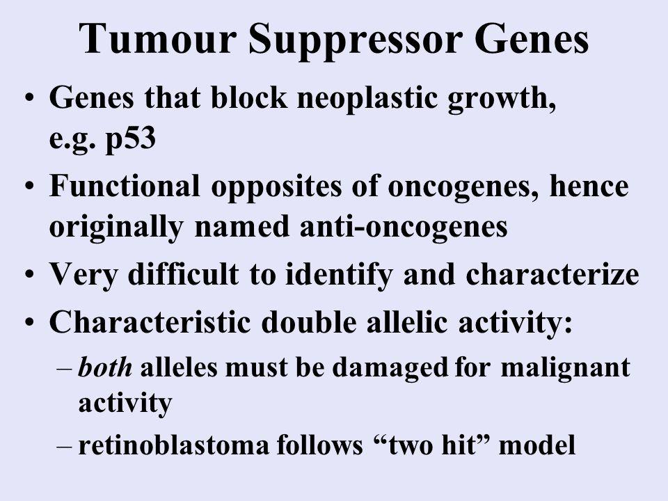 Tumour Suppressor Genes Genes that block neoplastic growth, e.g.