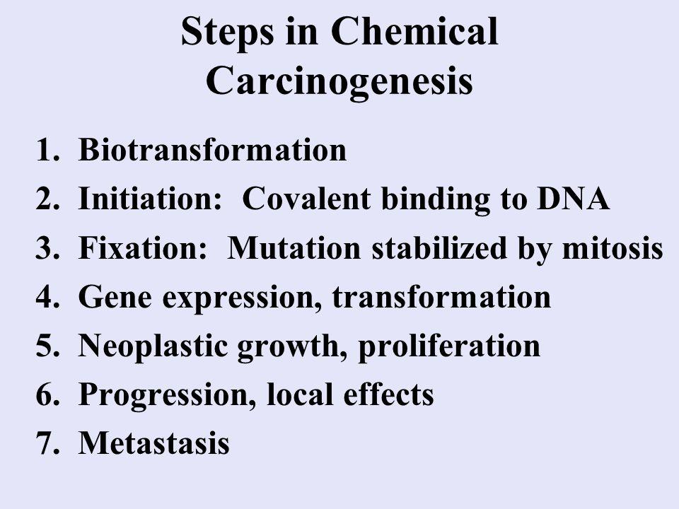 Steps in Chemical Carcinogenesis 1. Biotransformation 2.