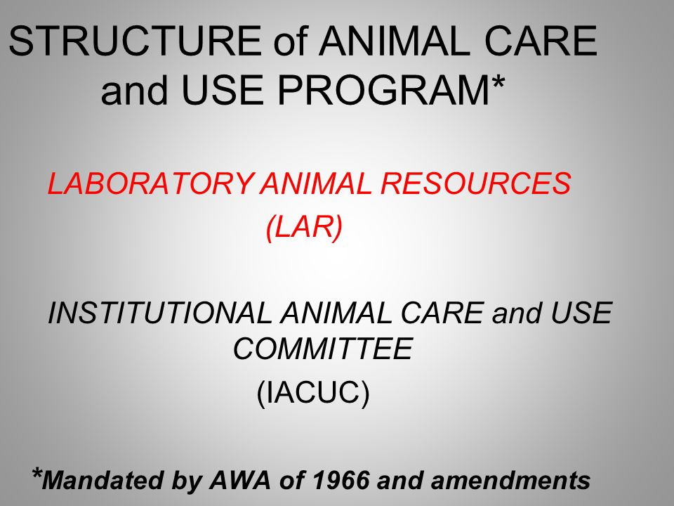 STRUCTURE of ANIMAL CARE and USE PROGRAM* LABORATORY ANIMAL RESOURCES (LAR) INSTITUTIONAL ANIMAL CARE and USE COMMITTEE (IACUC) * Mandated by AWA of 1966 and amendments