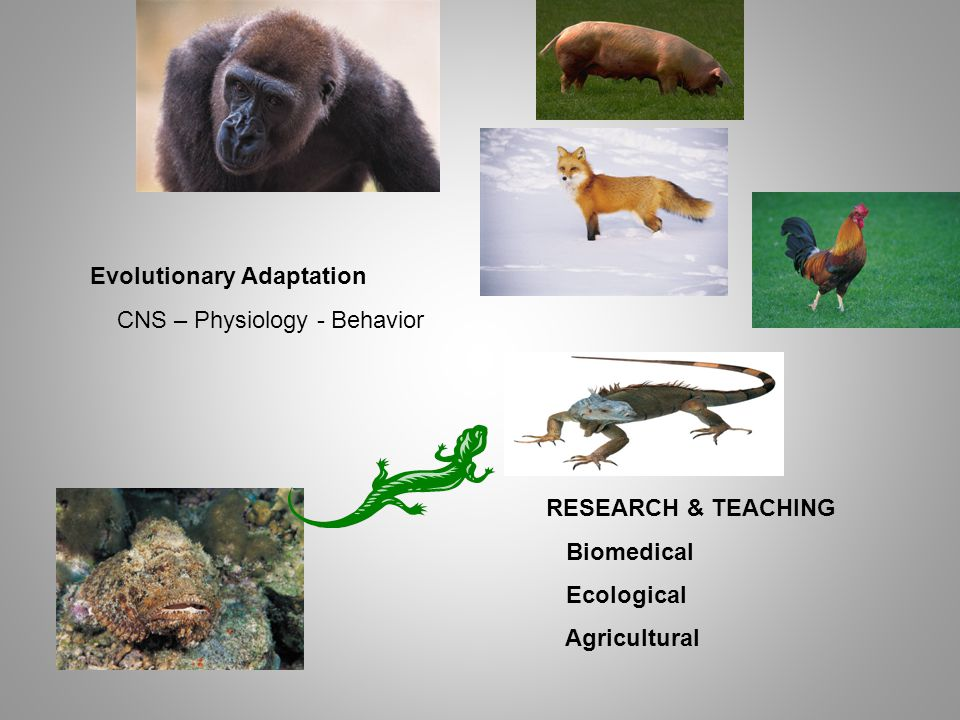 Evolutionary Adaptation CNS – Physiology - Behavior RESEARCH & TEACHING Biomedical Ecological Agricultural