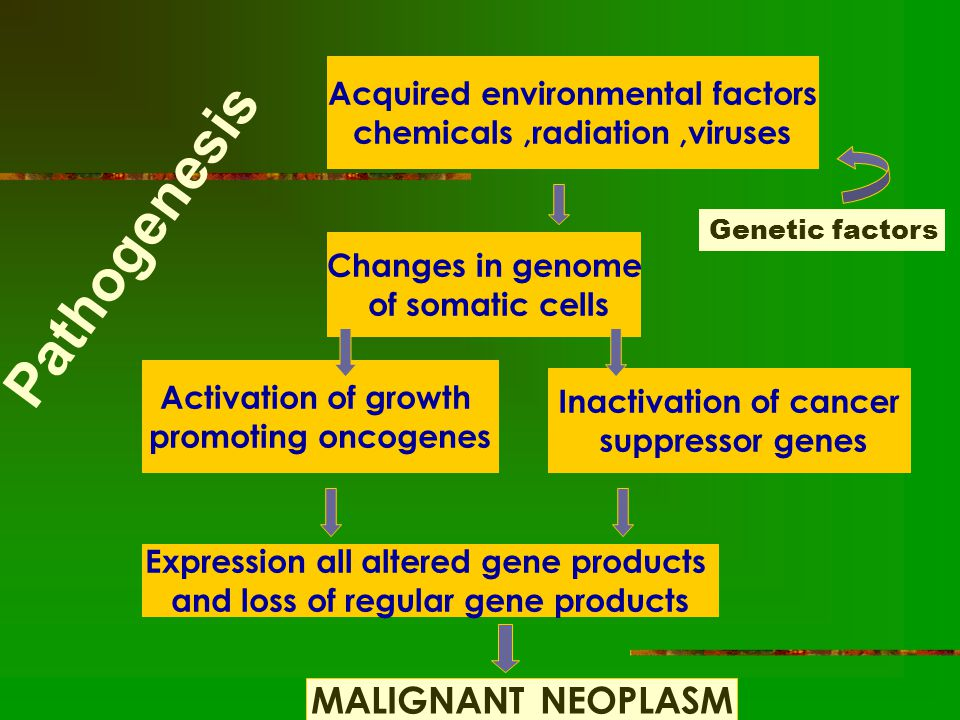 Pathogenesis Acquired environmental factors chemicals,radiation,viruses Changes in genome of somatic cells Activation of growth promoting oncogenes Inactivation of cancer suppressor genes Expression all altered gene products and loss of regular gene products MALIGNANT NEOPLASM Genetic factors