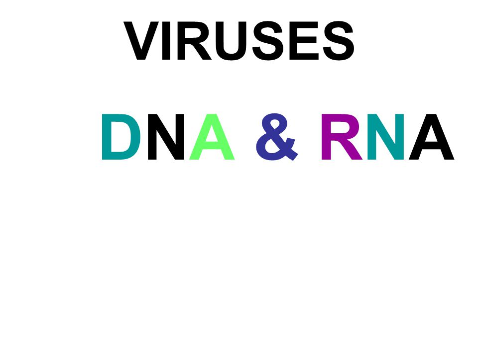 VIRUSES DNA & RNADNA & RNA