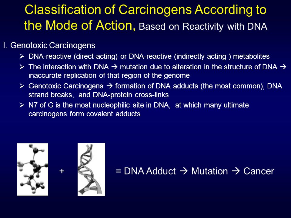 Classification of Carcinogens According to the Mode of Action, Based on Reactivity with DNA I.Genotoxic Carcinogens  DNA-reactive (direct-acting) or DNA-reactive (indirectly acting ) metabolites  The interaction with DNA  mutation due to alteration in the structure of DNA  inaccurate replication of that region of the genome  Genotoxic Carcinogens  formation of DNA adducts (the most common), DNA strand breaks, and DNA-protein cross-links  N7 of G is the most nucleophilic site in DNA, at which many ultimate carcinogens form covalent adducts + = DNA Adduct  Mutation  Cancer