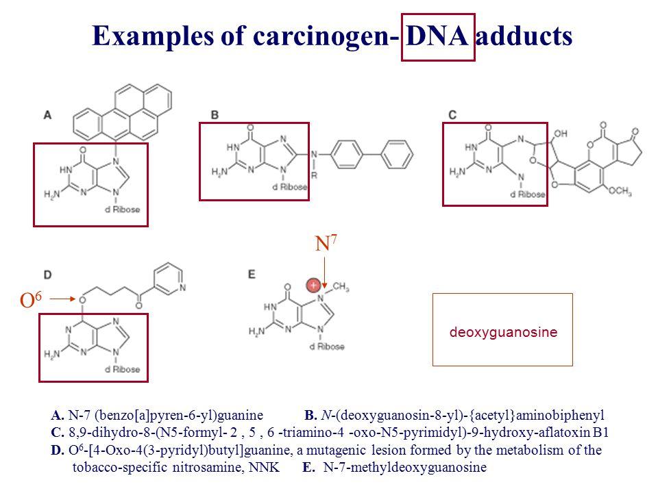 A. N-7 (benzo[a]pyren-6-yl)guanine B. N-(deoxyguanosin-8-yl)-{acetyl}aminobiphenyl C.