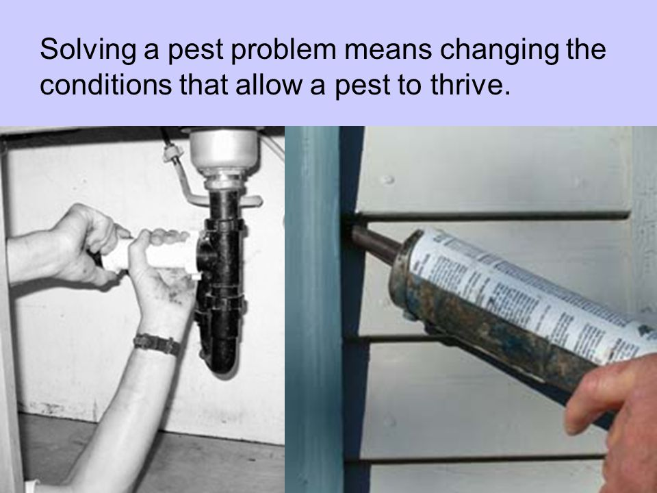 Solving a pest problem means changing the conditions that allow a pest to thrive.