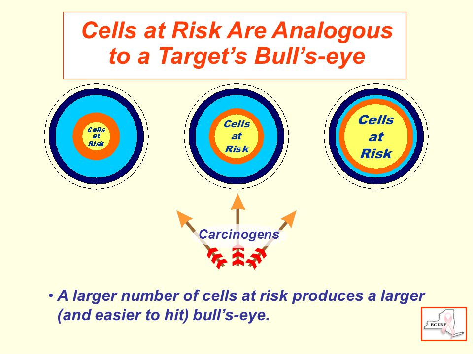 Cells at Risk Are Analogous to a Target's Bull's-eye Carcinogens A larger number of cells at risk produces a larger (and easier to hit) bull's-eye.
