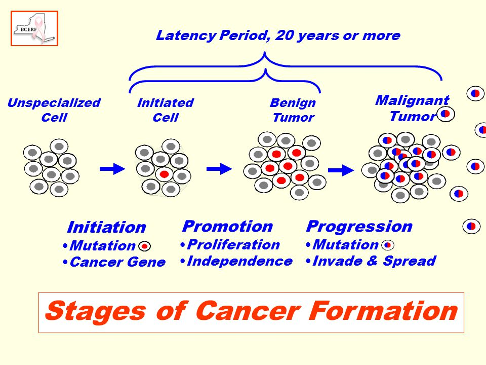 Smoking Tobacco Effect of adult smoking (active & passive) is unclear Age beginning smoking may be important Heavy smokers below age 20 have a 30% to 80% increase in breast cancer risk Cigarette smoke contains numerous chemical which can initiate and promote cancer Breast fluids of smokers contain chemicals from cigarette smoke