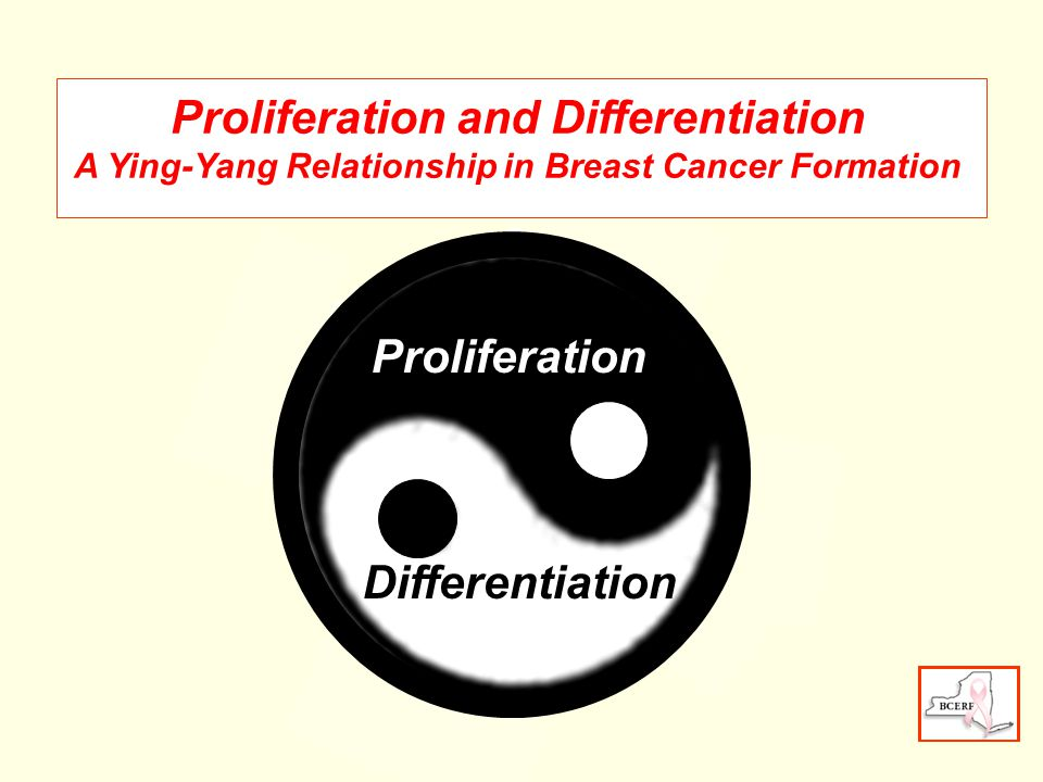 Proliferation Differentiation Proliferation and Differentiation A Ying-Yang Relationship in Breast Cancer Formation
