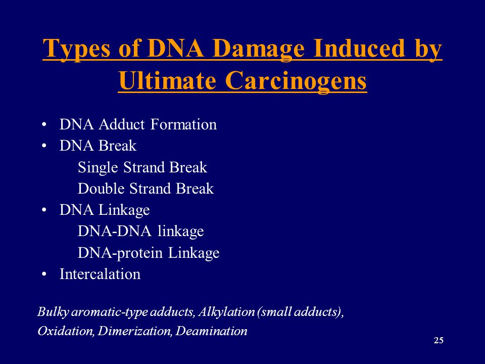 25 Types of DNA Damage Induced by Ultimate Carcinogens DNA Adduct Formation DNA Break Single Strand Break Double Strand Break DNA Linkage DNA-DNA link