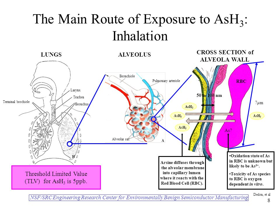NSF/SRC Engineering Research Center for Environmentally Benign Semiconductor Manufacturing Dedon, et al 8 The Main Route of Exposure to AsH 3 : Inhalation Larynx Trachea Bronchus Terminal brochiole AsH 3 Alveolar sac Pulmonary arteriole Bronchiole As.