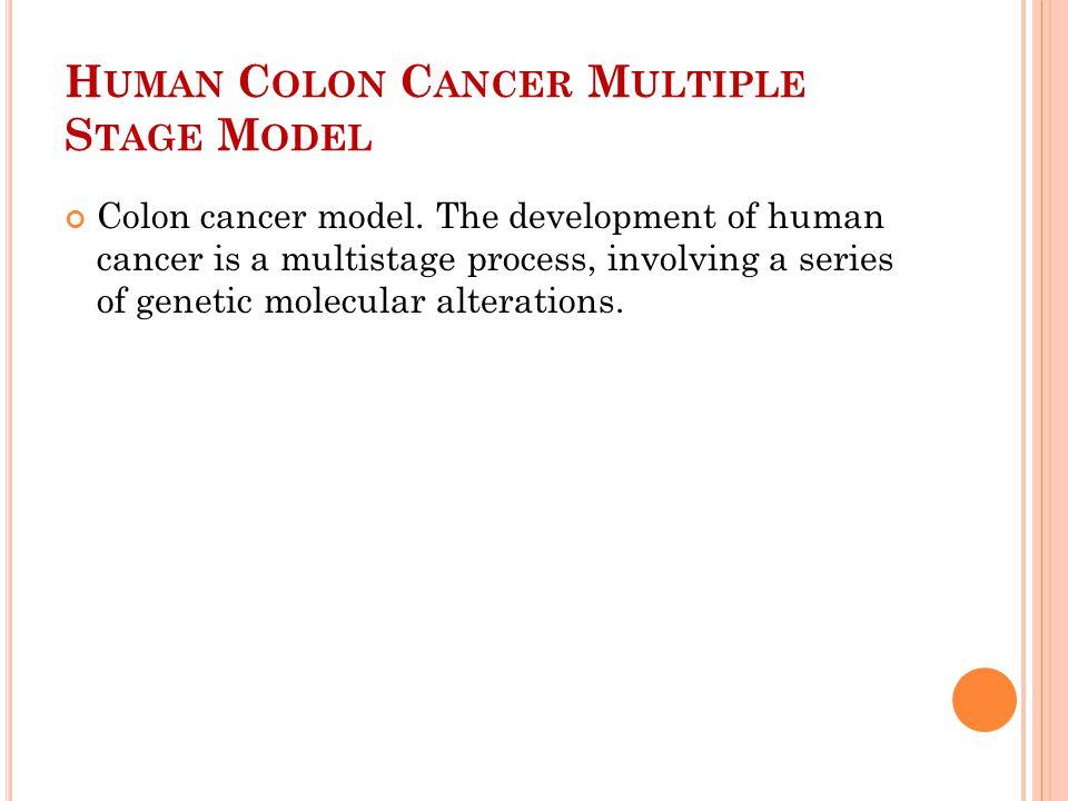 H UMAN C OLON C ANCER M ULTIPLE S TAGE M ODEL Colon cancer model.