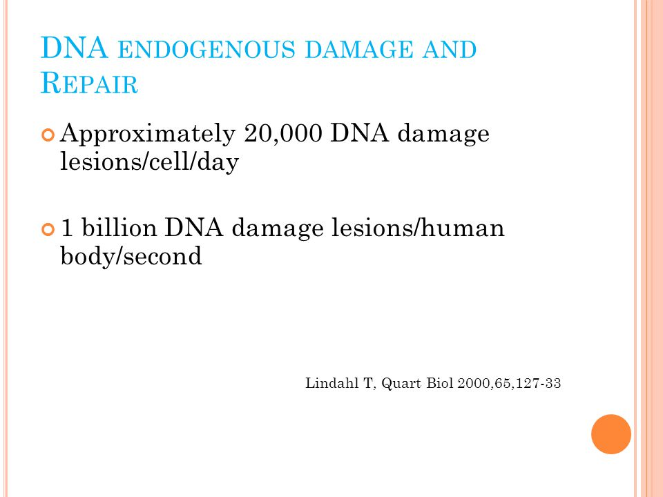 DNA ENDOGENOUS DAMAGE AND R EPAIR Approximately 20,000 DNA damage lesions/cell/day 1 billion DNA damage lesions/human body/second Lindahl T, Quart Biol 2000,65,127-33
