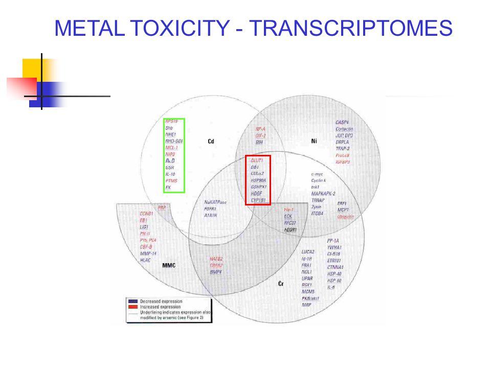 METAL TOXICITY - TRANSCRIPTOMES Andrew, Env Health Persp 111: 825-838, 2003