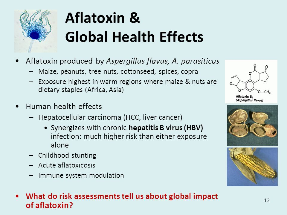 12 Aflatoxin & Global Health Effects Aflatoxin produced by Aspergillus flavus, A.