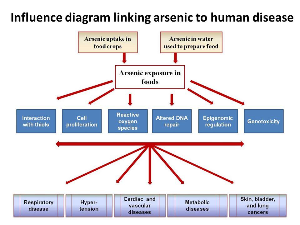 Influence diagram linking arsenic to human disease