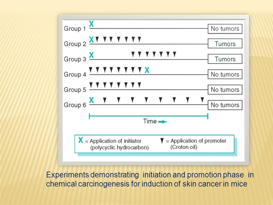 Experiments demonstrating initiation and promotion phase in chemical carcinogenesis for induction of skin cancer in mice